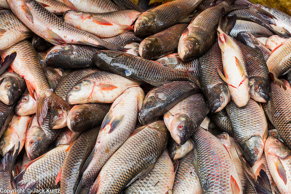 09 JUNE 2014 - YANGON, MYANMAR: Fresh fish for sale in the San Pya Fish Market (also spelled Sanpya). San Pya Fish Market in Yangon is one of the largest wholesale fish markets in Yangon. The market is busiest in early in the morning, from before dawn until about 10AM.    PHOTO BY JACK KURTZ