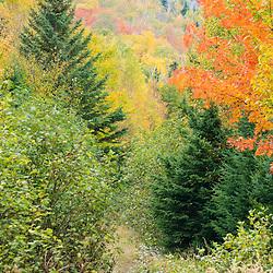 Fall foliage on the western side of Crocker Mountain in Reddington Township, Maine.  High Peaks Region.