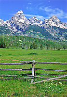 A lush open meadow below the Teton Range.  Grand Teton National Park, Wyoming, USA