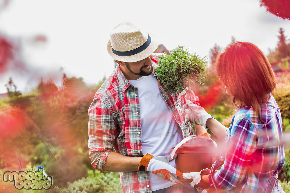 Portrait of man carrying pot while beautiful gardener checking plants in the garden
