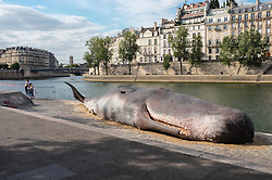 July 21, 2017 - Paris, France - Demostration against the whales hunting: an association made a giant whales in front of the Notre Dame Cathedral in Paris on 21 July 2017. (Credit Image: © Julien Mattia/NurPhoto via ZUMA Press)