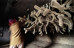 The worker of a private farm put cut off antlers of a deer into the high temperature drying room in the Altai (eastern Siberia) village of Mendur-Sokon, Russia, 29 July 2001. Local population traditionally sell pants (the young, just grown antlers of a deer) to farmacilogical factories, which produce extremely effective biological active medicine Pantacrin with high tonic effect. The antlers are sold by local people for about $150 per kilo, which cost up to $500 on Asian markets..