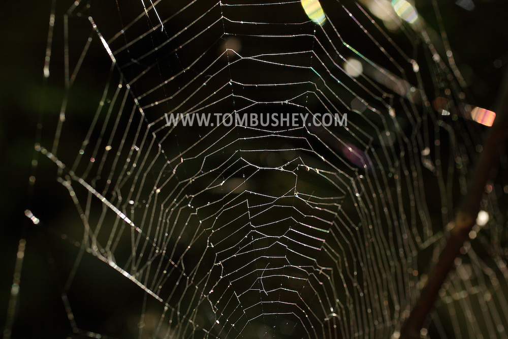 Salisbury Mills, New York -  A spider web backlit by the sun on Sept. 25, 2010.