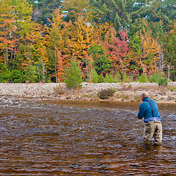 A man fly-fishing on the Swift River in Albany, New Hampshire.  White Mountains. Fall.