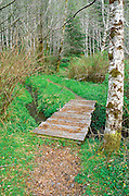 Trail and wooden footbridge over Mill Creek, Del Norte Coast Redwoods State Park, California