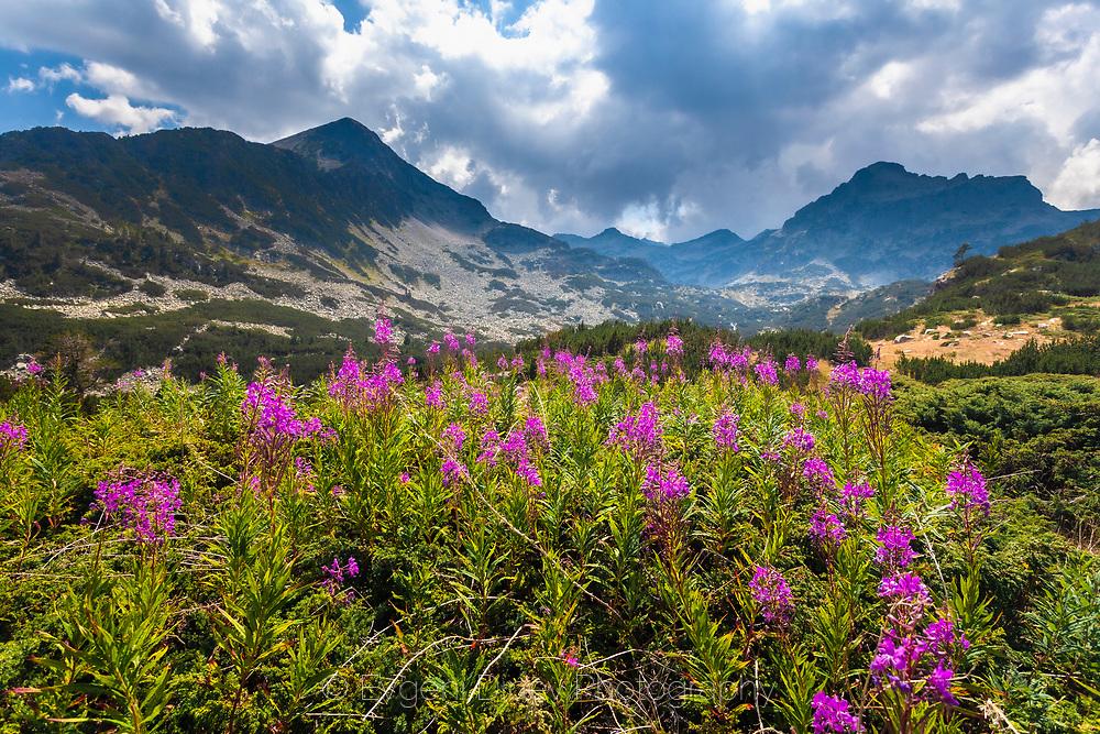Beautiful Bulgarian moutain Pirin in August