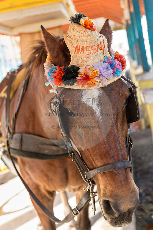 A carriage horse waits for tourists at Prince George Wharf, Nassau, Bahamas, Caribbean
