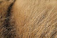 Pale Eoliche nella campagna nei dintorni di Minervino Murge (non inquadrate) immerse nella vegetazione locale. Nella foto un campo di erba secca.