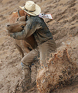 Bull Dogger #1819 struggles in the mud to get a score by pinning the calf, 28 July 2007, Cheyenne Frontier Days