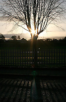 Winter sunset through bare tree at local park in Sallynoggin Dublin Ireland