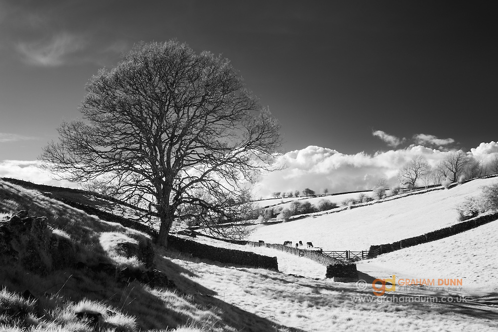 Early evening sunlight in Upper Lathkill Dale. White Peak, Derbyshire. Peak District National Park, England, UK. Captured in infrared & converted to black and white.