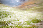 Impressions of nature - abstract blur of wildflowers on Skomer Island, National Nature Reserve, South Wales