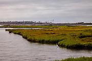 Snowy Egret in Bolsa Chica Ecological Reserve, Orange County, California, USA