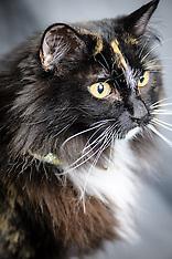 Shuger - Cat