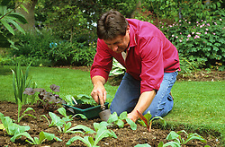Alan Titchmarsh planting out frost tender summer bedding plants into a border