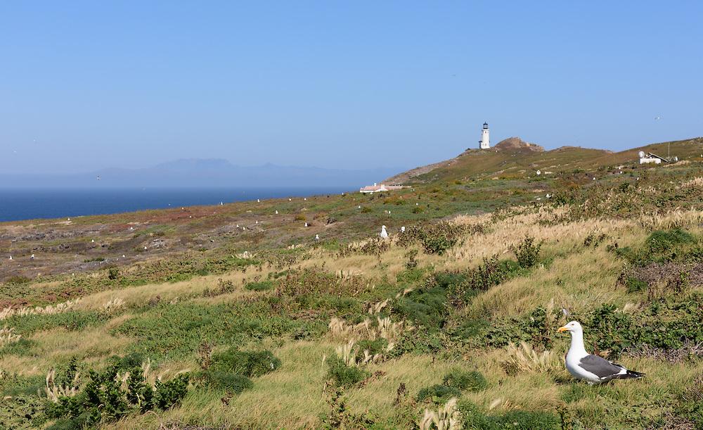 Anacapa Island Lighthouse, Channel Islands National Park, California,Channel Islands National Park, California