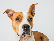 Adoptable dogs & cats - Sept 2, 2015