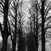 Trees in a garden of Pärnu