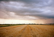 Thunderstorm develops above cornfield landscape in summertime, South of Holland.