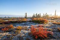 Tundra colours, Nunavut, Canada