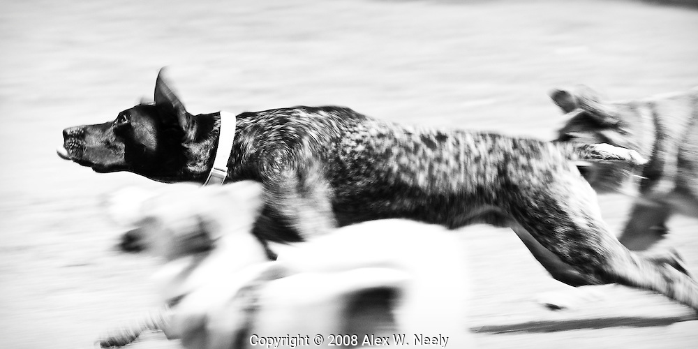Action at the off-leash dog park on Lake Drive Park in Smyrna, GA.