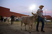 Tim Uden of Juniata  moves cattle Tuesday evening in the Cattle Tie Outs during the Nebraska State Fair in Grand Island. (Independent/Matt Dixon)
