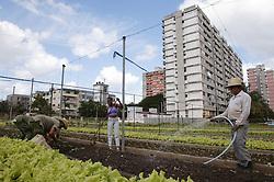 People working at Organiponico La Sazon urban farm; Havana; Cuba,