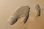"""Vom Wüstenwind antransportiert sammeln sich organische Überreste in den windgeschützten Senken zwischen den Dünenbergen der Namib. Diese vielfältige Mischung von kleingeriebenen Materialien wird als """"Müsli"""" bezeichnet und ist ein wichtiges Element innerhalb der Nahrungskette in der Wüste. Silberfischchen und Käfer ernähren sich von dieser Streu, was wiederum andere Tiere anlockt, die Insekten fressen."""