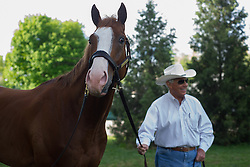 Kentucky Derby 139 entrant Will Take Charge is grazed by trainer D. Wayne Lukas after workouts Thursday, May 02, 2013 at Churchill Downs in Louisville. Photo by Justin Gilliland