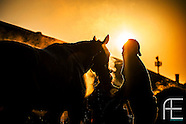 2013 Horse Racing