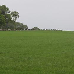 Peloton near Markelo