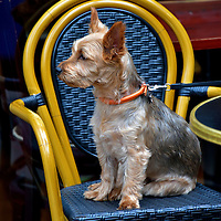 Terrier on Throne at Windsor, England<br />