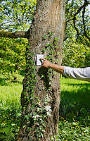 A persons arm and hand flipping a switch on a tree in an outdoor forest / park like setting.