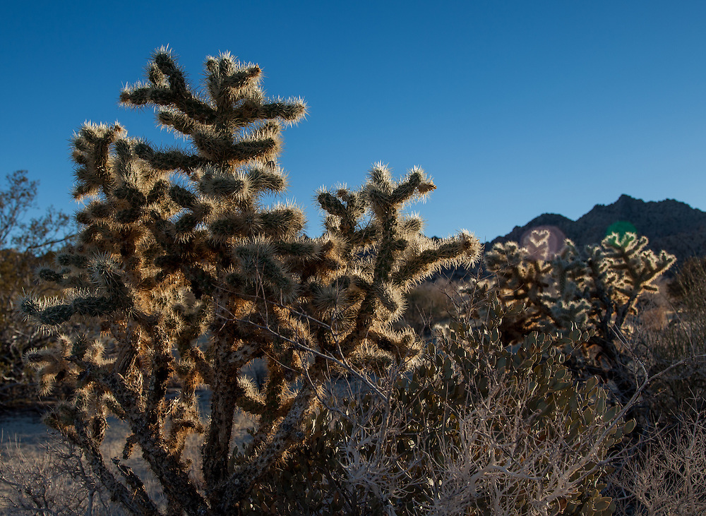 Photos of Joshua Tree National Park