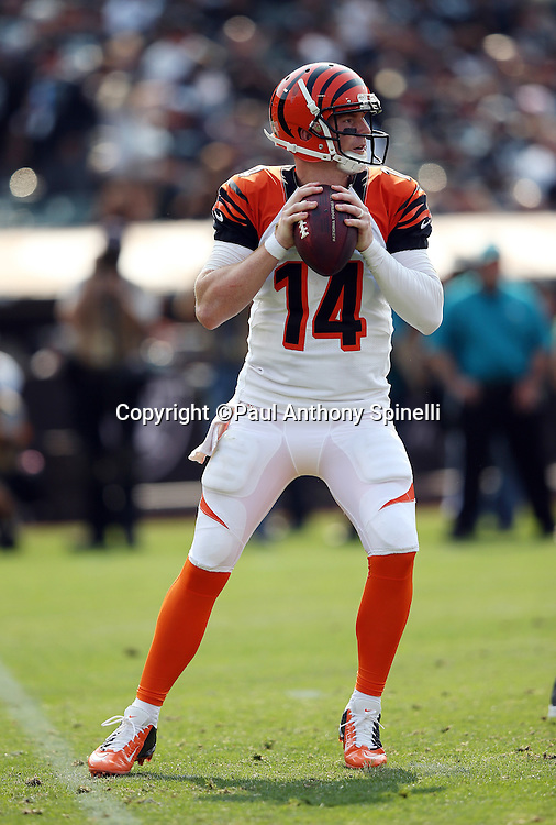 Cincinnati Bengals quarterback Andy Dalton (14) drop back to pass during the 2015 NFL week 1 regular season football game against the Oakland Raiders on Sunday, Sept. 13, 2015 in Oakland, Calif. The Bengals won the game 33-13. (©Paul Anthony Spinelli)
