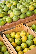 Saturday farmers market, Honokaa, Hamakua Coast, Island of Hawaii