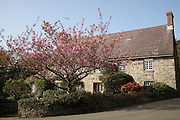 Cherry blossom tree house, Torteval, Guernsey, Channel Islands