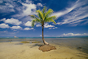 Coconut Palm Tree growing in middle of ocean; South Pacific struggle