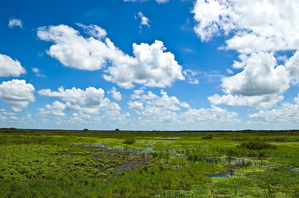 Environmentally sensitive wetlands in Southwest Florida.