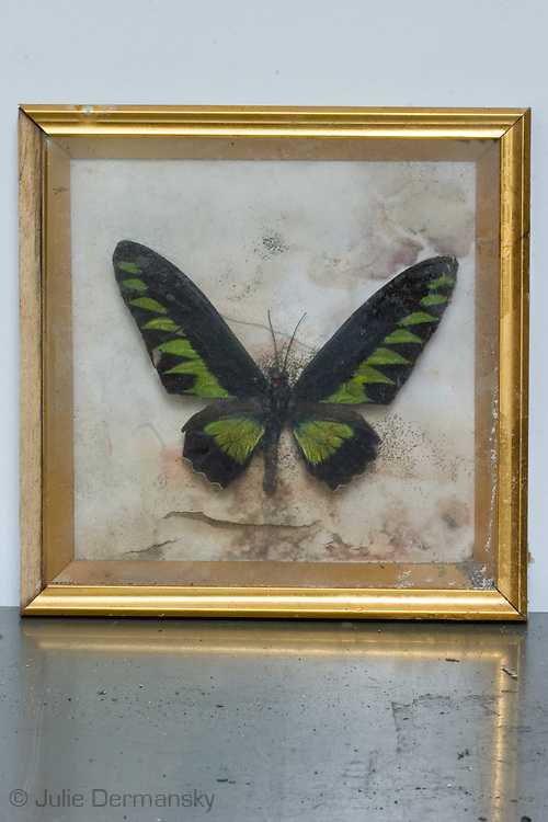 May 24, 2007, Butterfly in a frame found in a home destroyed by Hurricane Katrina in New Orleans.