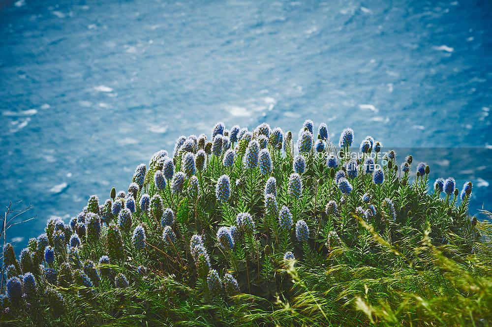 Flowers in spring near the Big Ocean