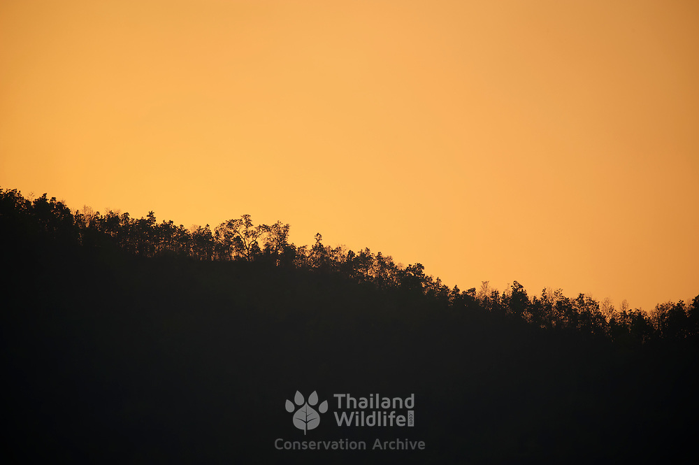 Silhouette of trees at sunset on a ridge in Phu Hin Rong Kla National Park Thailand