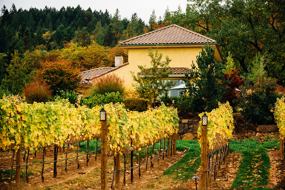 Southern Oregon Vineyards