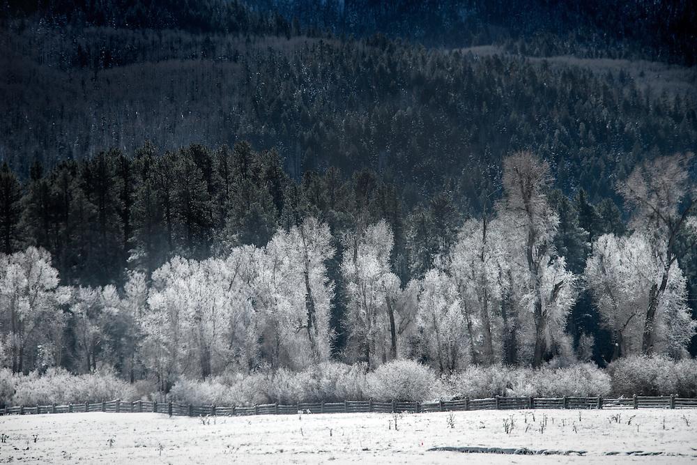 Dense forest in American landscape