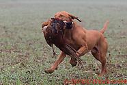 Washbrook Farm Shoot  7th January 2017