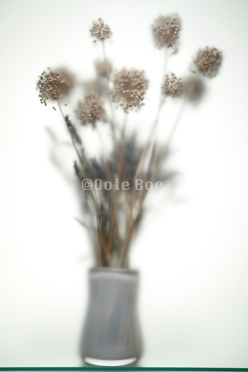 dried persion onion bouquet seed bolls