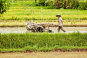 Apr. 22 - UBUD, BALI, INDONESIA: A farmer prepares his rice paddy for planting in Ubud, Bali, Indonesia.  Rice is an integral part of the Balinese culture. The rituals of the cycle of planting, maintaining, irrigating, and harvesting rice enrich the cultural life of Bali beyond a single staple can ever hope to do. Despite the importance of rice, Bali does not produce enough rice for its own needs and imports rice from nearby Thailand.   Photo by Jack Kurtz/ZUMA Press.