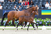 Lady Jane<br /> Excellent Dressage Sales<br /> Longines FEI/WBFSH World Breeding Dressage Championships for Young Horses 2016<br /> © DigiShots