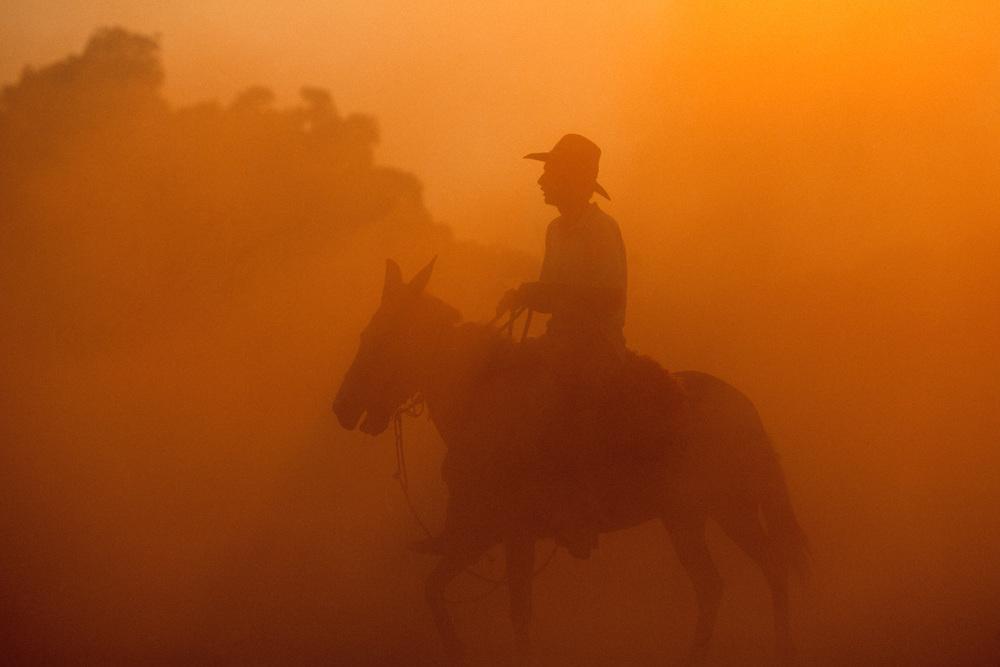 Cowboys / Vaqueiros, Pantanal, Brazil