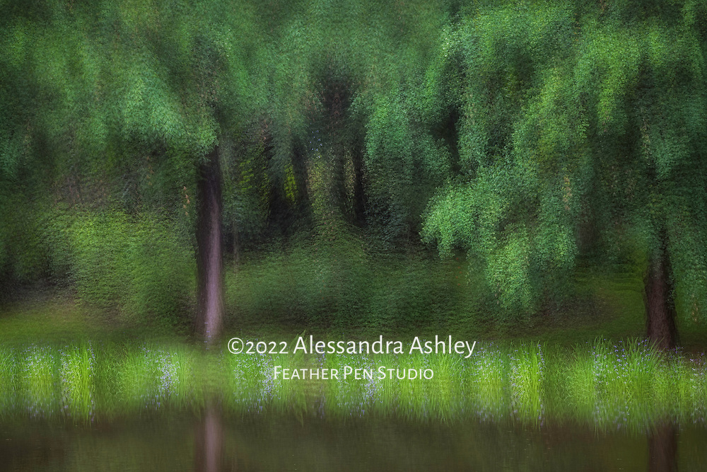 Woodland pond reflects foliage and blooms during spring rain. Multi-exposure montage enhanced with painted effects.